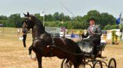Weer succesvolle Paardenfokdag