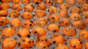 Oliebollen en appelbeignetsverkoop voor horeca Hoevelaken