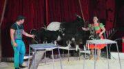 Circus Barani komt naar Nijkerk
