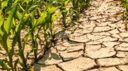 Boeren in Gelderland komen met oplossingen voor gevolgen extreem weer